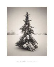 Winter Spruce poster print by B Schwab