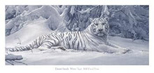 White Tiger poster print by D Smith