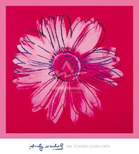 Daisy, C 1982 (Crimson And Pink) poster print by Andy Warhol