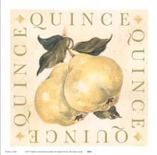 Quince poster print by Michael Alexander