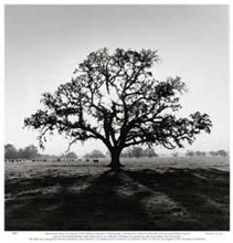 Oak Tree, Sunrise poster print by Jean Ekman Adams