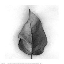 Aspen Leaf In Snow poster print by Jeffrey Conley