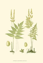 Spring Ferns I poster print by Jh Emerton