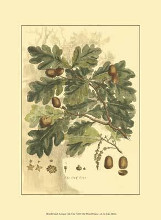 Small Antique Oak Tree poster print by John Miller