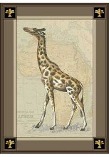 Giraffe with Border I poster print by  Unknown