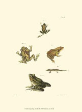 Antique Frogs I poster print by Jw Hill