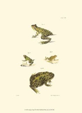 Antique Frogs II poster print by Jw Hill