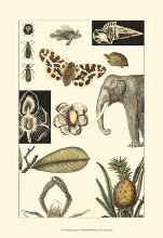 Nature's Curio I poster print by  Vision Studio