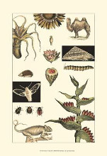 Nature's Curio III poster print by  Vision Studio