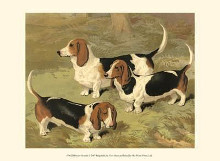 Basset Hounds poster print by Vero Shaw