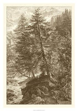 Sepia Larch Tree poster print by Ernst Heyn