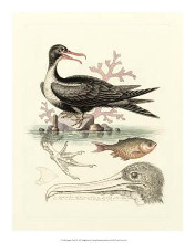 Aquatic Birds I poster print by George Edwards