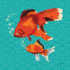 Goldfish I poster print by Patty Young