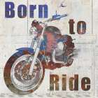 Born to Ride poster print by Allen Kimberly
