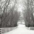 Country Lane in Winter poster print