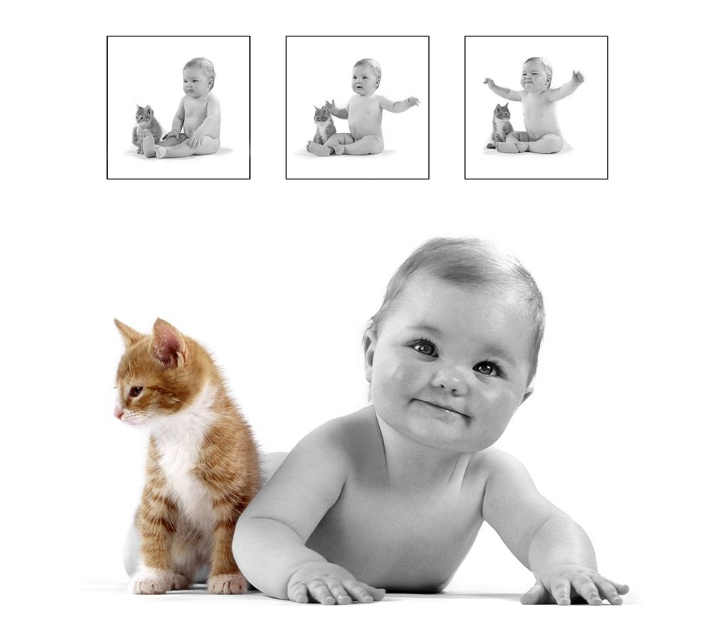 baby and kitten poster print by Patrick Hoenderkamp