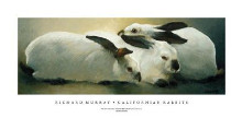 Californian Rabbits poster print by Richard Murray