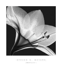 Amaryllis 1 poster print by Steven N Meyers