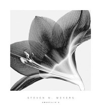 Amaryllis 2 poster print by Steven N Meyers