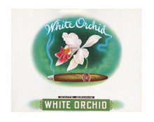 White Orchid poster print by  Unknown