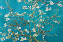 Almond Blossom poster print