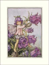 Canterbury Bell Fairy poster print