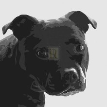 Staffordshire Bull poster print by Emily Burrowes
