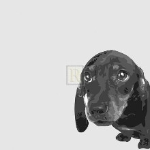 Dachshund poster print by Emily Burrowes