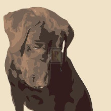 Chocolate Labrador poster print by Emily Burrowes