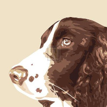 Springer Spaniel poster print by Emily Burrowes