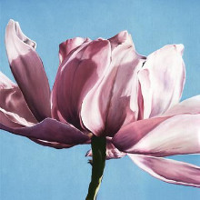 Magnolia In A Cloudless Sky poster print by Scott Walker