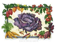 Cabbage poster print by Monika Broeske