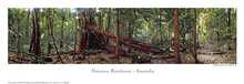 Daintree Rainforest poster print by Phil Gray